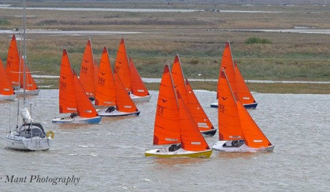 Squibs at RCYC Regatta Week